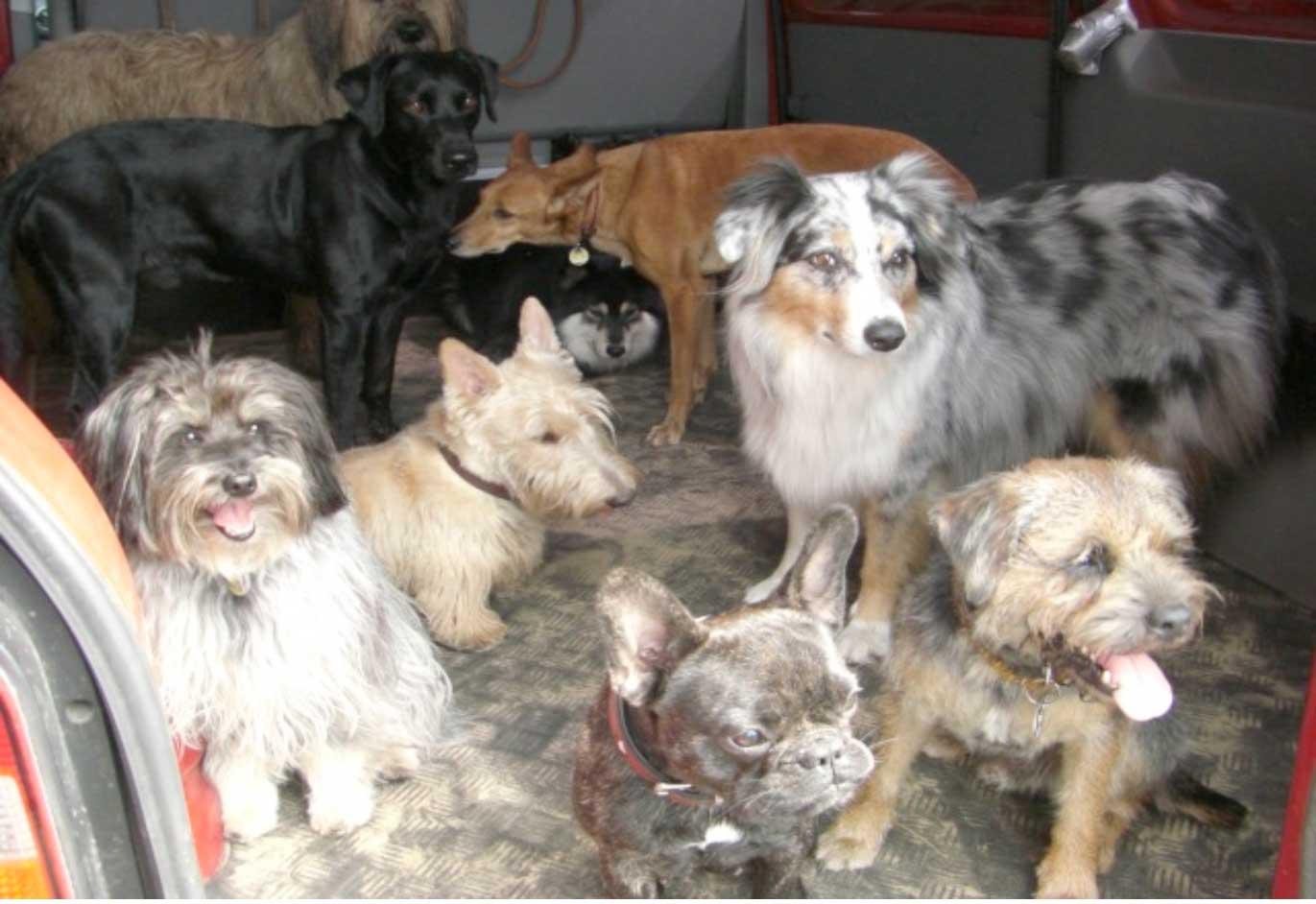 Hund per Kleinanzeige kaufen und verkaufen