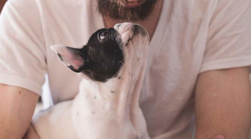 Koerperkontakt zu Hunde