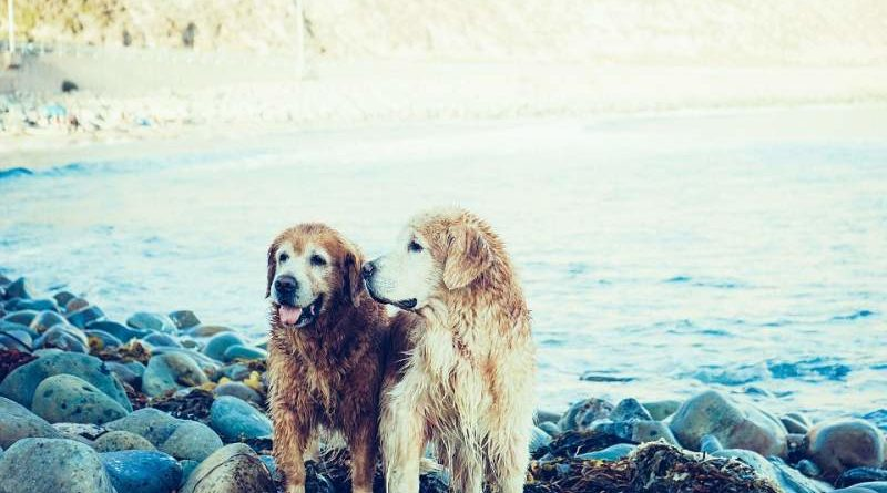 Hundepaare