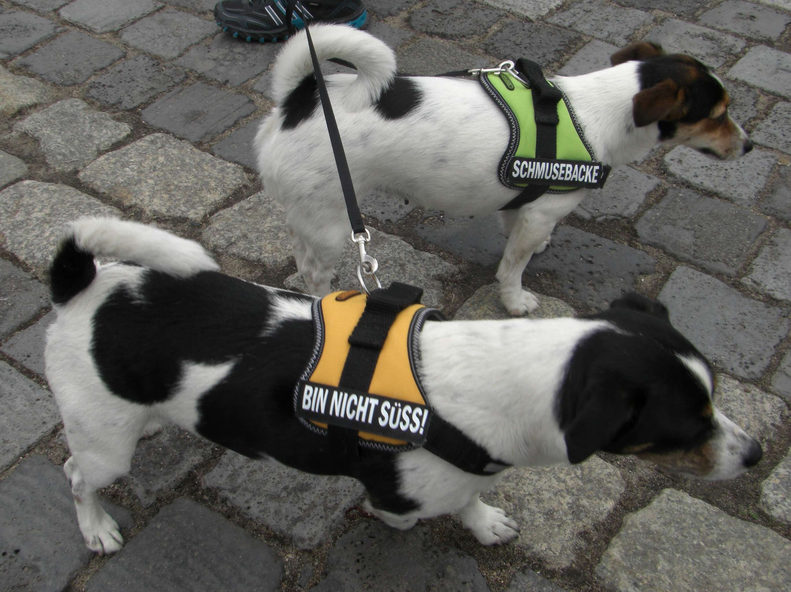 Hunde beim St. Wauli Event