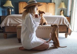 Hundeerziehung und Motiviation