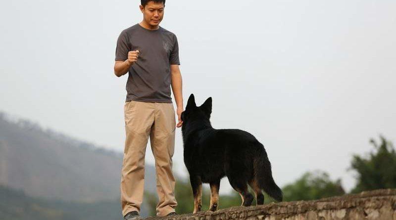 So lernt Hund zu kommen