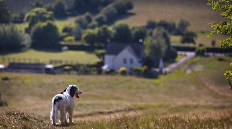 Wo lebt es sich als Hund am besten