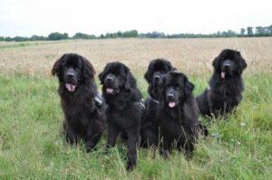 Balthasar, Charly, Lillyfee, Carry und Jirko (v. li.)