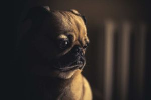 Trennungsangst bei Hunden