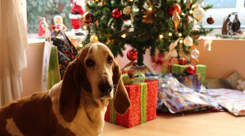 Weihnachtsgeschenkf für dein Hund