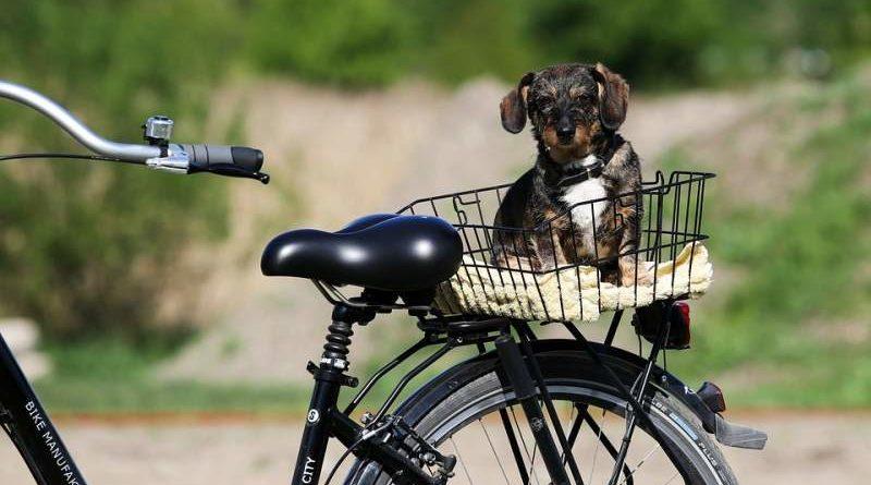 Hunde beim Radfahren