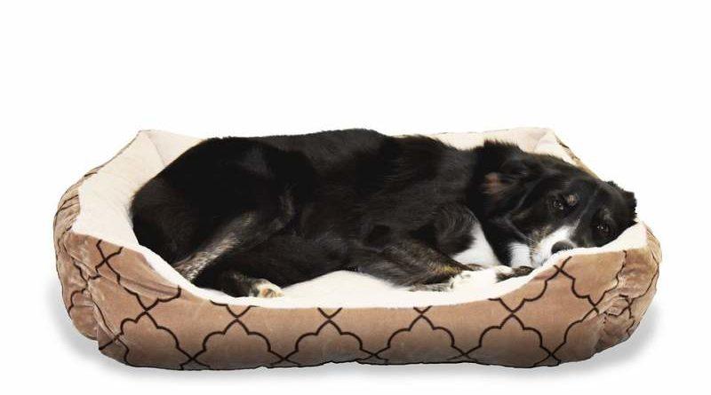 Der beste Schlafplatz