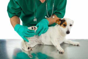 Hunde-Krankheiten