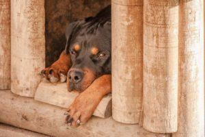 Hundehotel